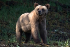Little Blonde Grizzly