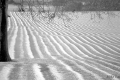 Furrows in the Snow