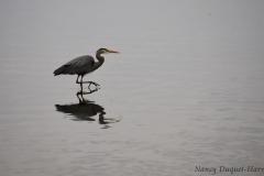 08-25-a-slow-stroll-estuary