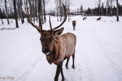 12-91-curious-elk