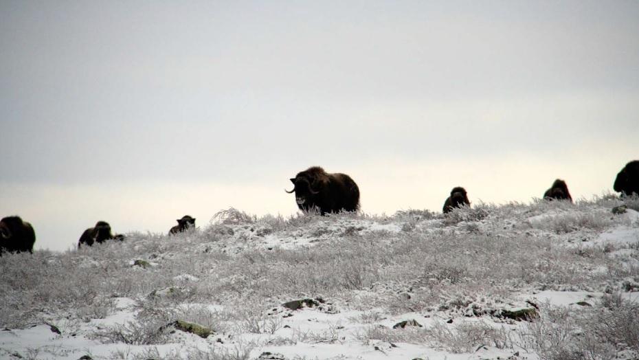 Dana_wildlife – Winter Visitors