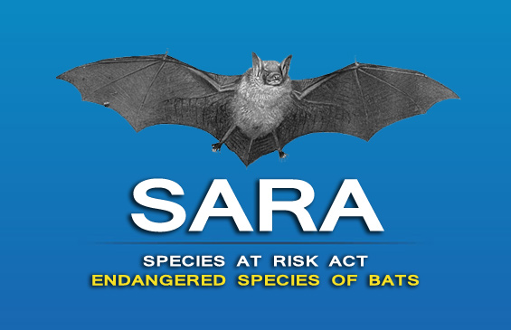 Species at Risk Act