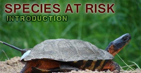 Species at Risk Introduction Course