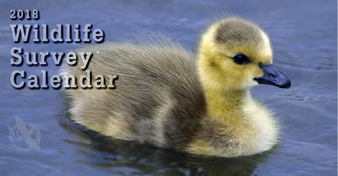 2018 Wildlife Survey Calendar