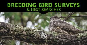 Breeding Bird Surveys and Nest Searches