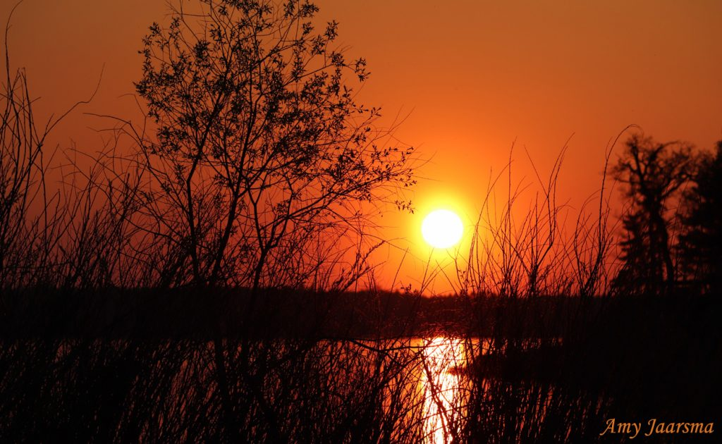 Simple Spring Sunset by Amy Jaarsma