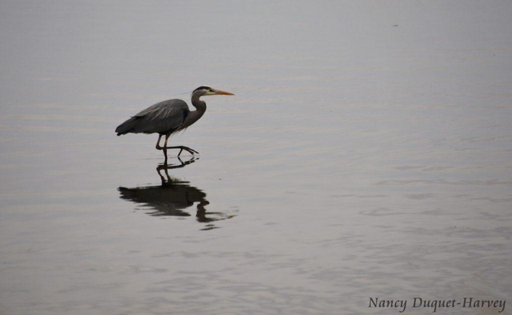 A Slow Stroll in the Estuary by Nancy Duquet-Harvey