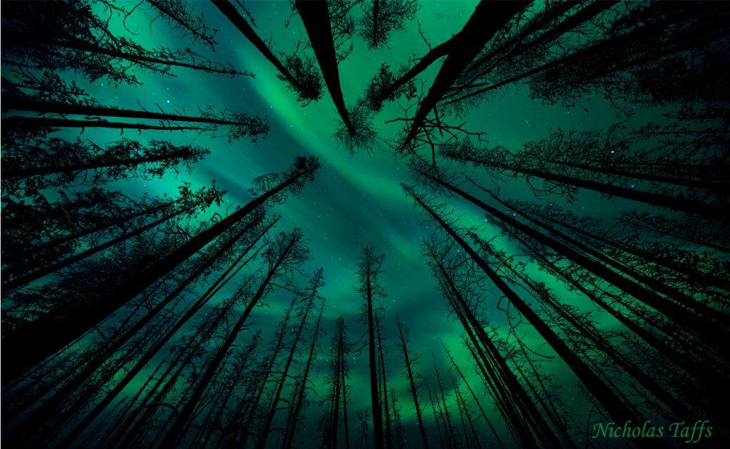 Enchanted Forest by Nicholas Taffs