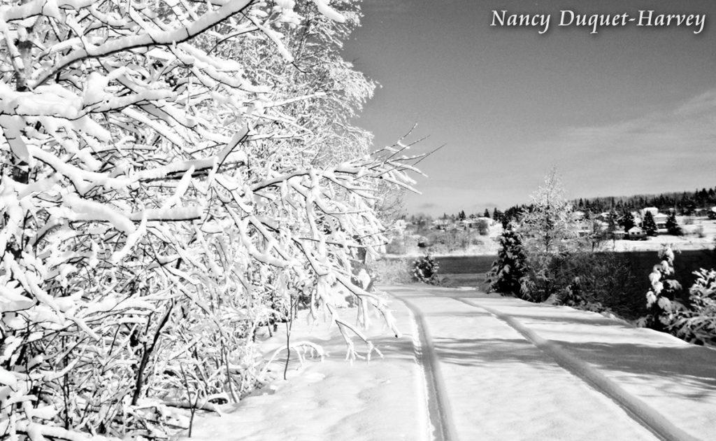 Winter Tracks by Nancy Duquet-Harvey