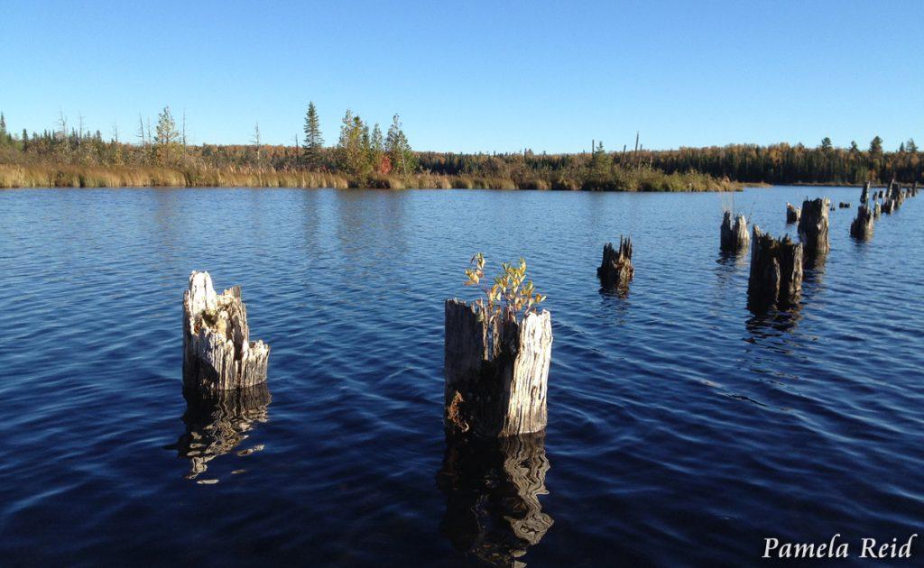 Dock Remnants by Pamela Powers