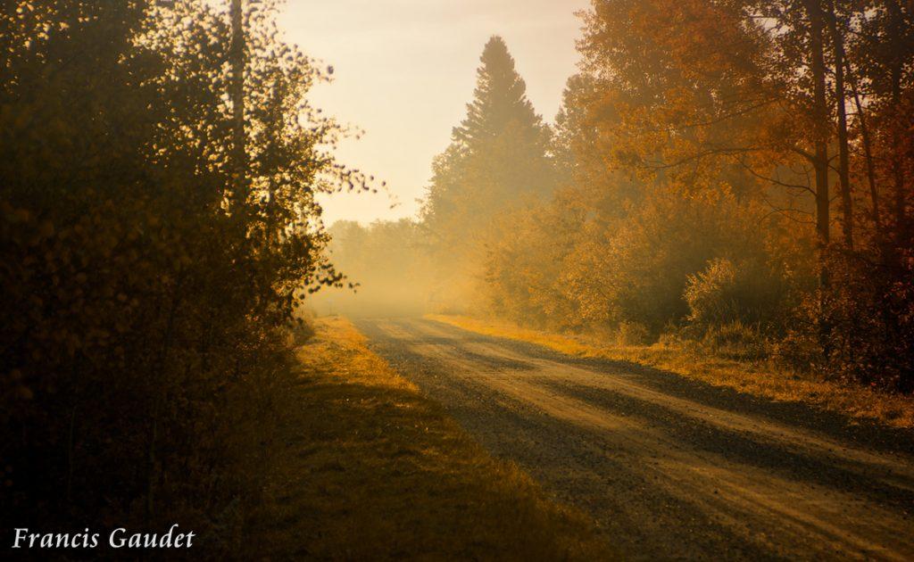 Foggy Fall by Francis Gaudet