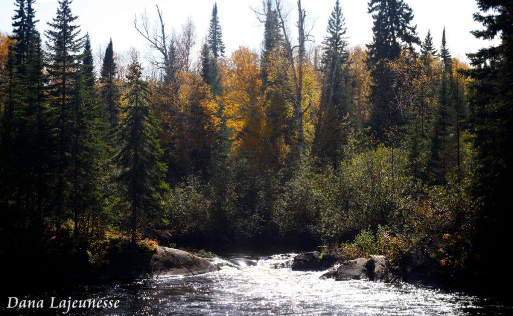 Autumn Rapids by Dana Lajeunesse